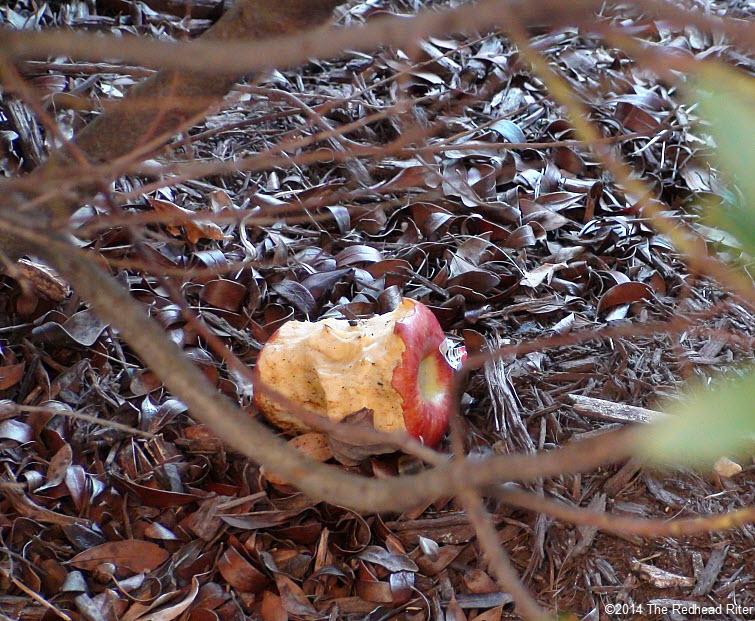 half eaten apple in forest