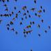 free birds by MahshidSohi