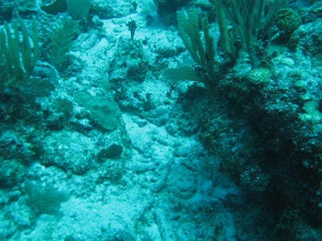 MVI_0385  Underwater Akumal