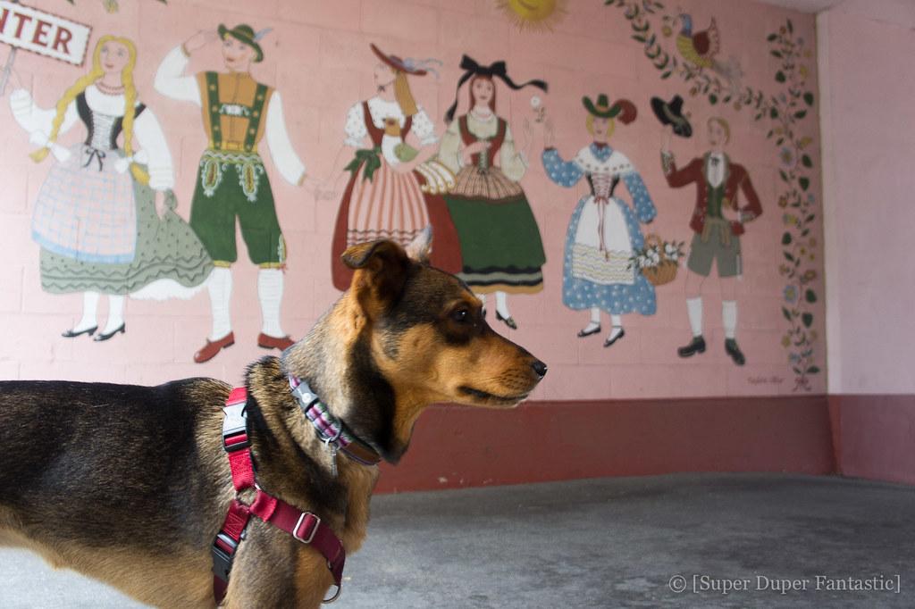 Dog-friendly Carmel-by-the-Sea: Hofsas House