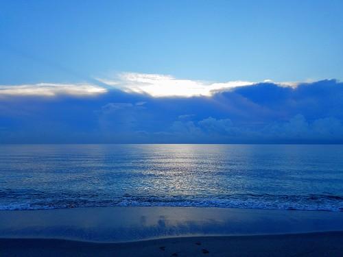 beach hollywoodbeach sunrise seagull ocean florida usa samsungsmg935a samsunggalaxys7edge outdoor shore seaside landscape coast sea water sky bluehour
