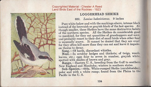 Chester_A_Reed_BirdGuidLandBirdsEastOFRockies1923-Shrike