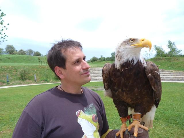 Con un águila calva en Cabárceno (Cantabria)