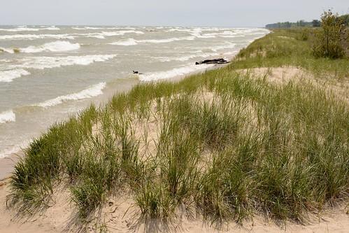 beach grass sand nikon waves lakemichigan d600 kohlerandrae devilducmike