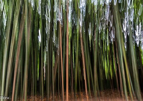 naturaleza portugal bosque bambú coimbra vegetal vegetacion quintadaslagrimas