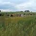 Visite de la plate-forme de blés anciens à Fromenteau (Côte d'Or)