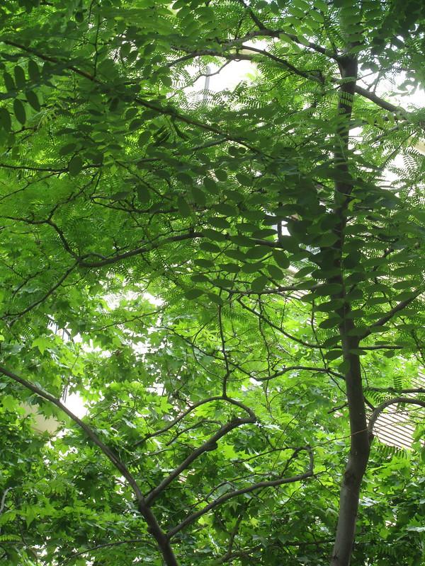 Foto de muchas hojas
