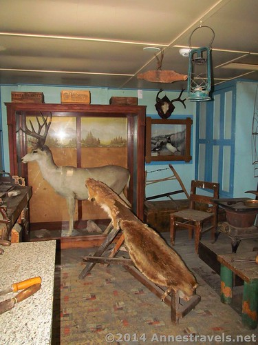 Inside the taxidermy shop at Hozwarth Historic Site, Rocky Mountain National Park, Colorado