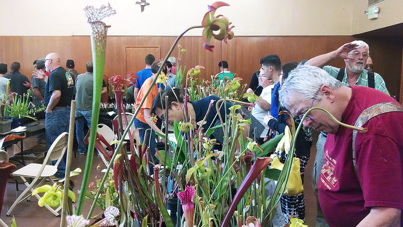Sarracenia for sale at the 2014 BACPS Show and Sale