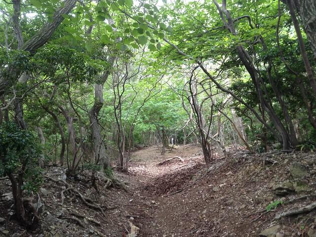 藤原岳 裏道(聖宝寺道) 登山道