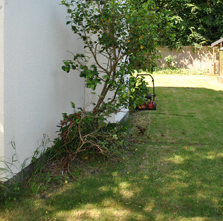 Side garden - before