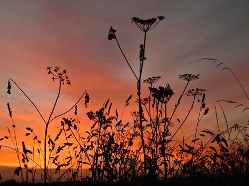 Gatenby silhouettes