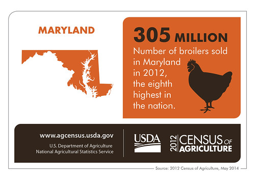 Maryland isn't chicken to talk about its agriculture – it ranks 8th in broilers sold in the USA.  Check back next Thursday as we spotlight another state's results from the 2012 Census of Agriculture.