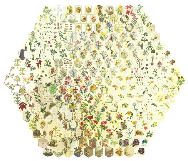 251 Random Flowers Arranged by Similarity