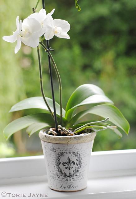MiaFleur plant pot
