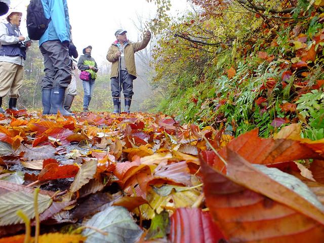 臥竜山の中腹から雪霊水へ歩く.道は落ち葉で彩られていた.