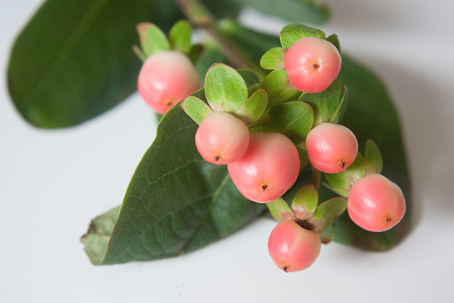 hypericum-berries-2