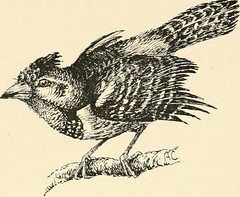 "Image from page 91 of ""On safari : big game hunting in British East Africa, with studies in bird-life"" (1908)"