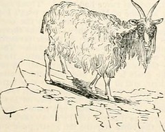 """Image from page 1116 of """"An encyclopædia of agriculture : comprising the theory and practice of the valuation, transfer, laying out, improvement, and management of landed property, and of the cultivation and economy of the animal and vegetable productions"""