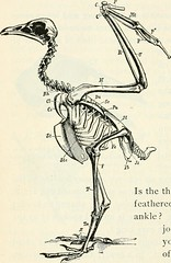 """Image from page 389 of """"First course in biology"""" (1908)"""