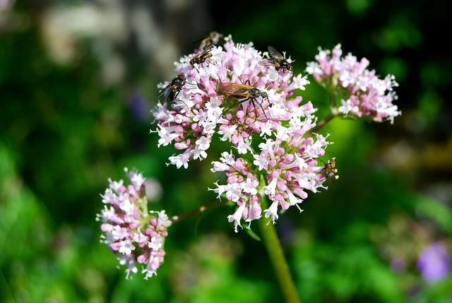 Nordic Flora