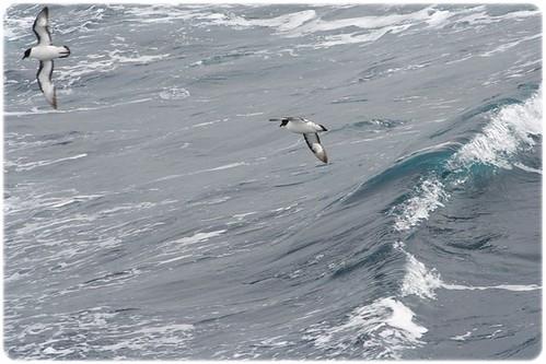 Drake Passage (5)
