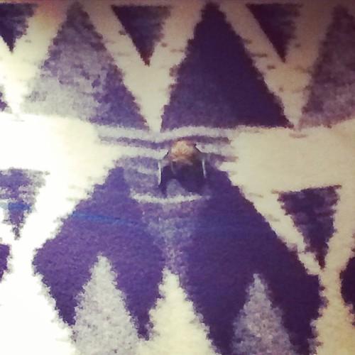 Bat on Pendleton blanket at Grant village gift shop