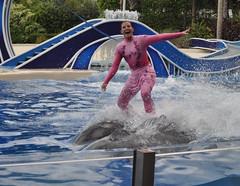 Dolphin Skiing