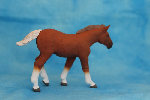 Walkaround of the 2014 Mojo Fun Suffolk Punch Foal 15061542121_dd5dc3b6c7