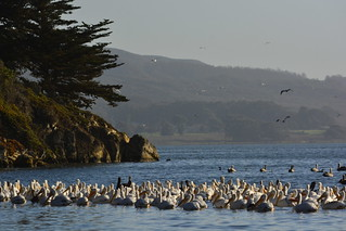 Windy Cove Morro Bay, CA 'feeding frenzy-ette'