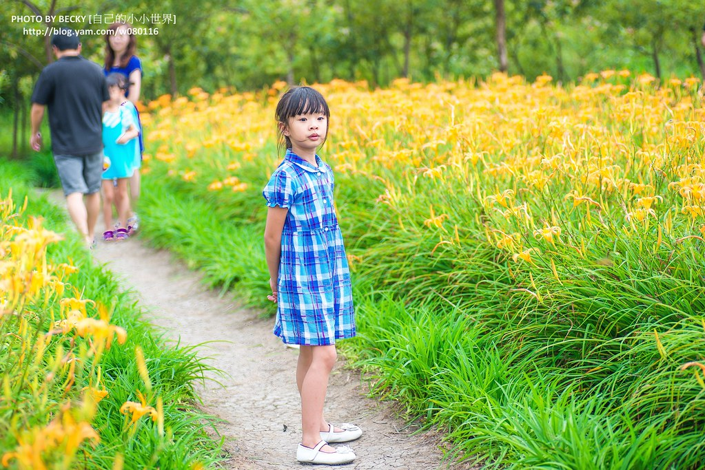 2014.Aug Day Lily @Nantou 南投金針花