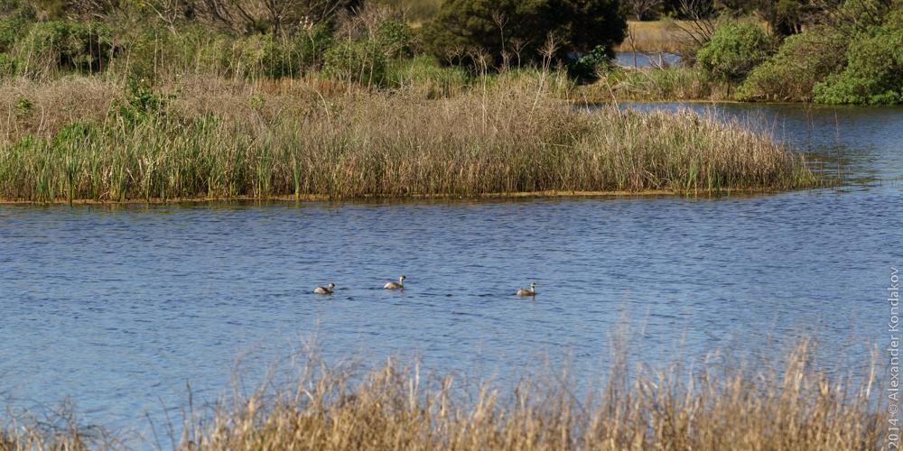 Birds SA Adelaide-2