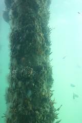 coral reef, algae, seaweed, marine biology, underwater, reef,