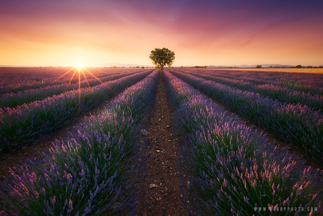 Magical Provence (France)