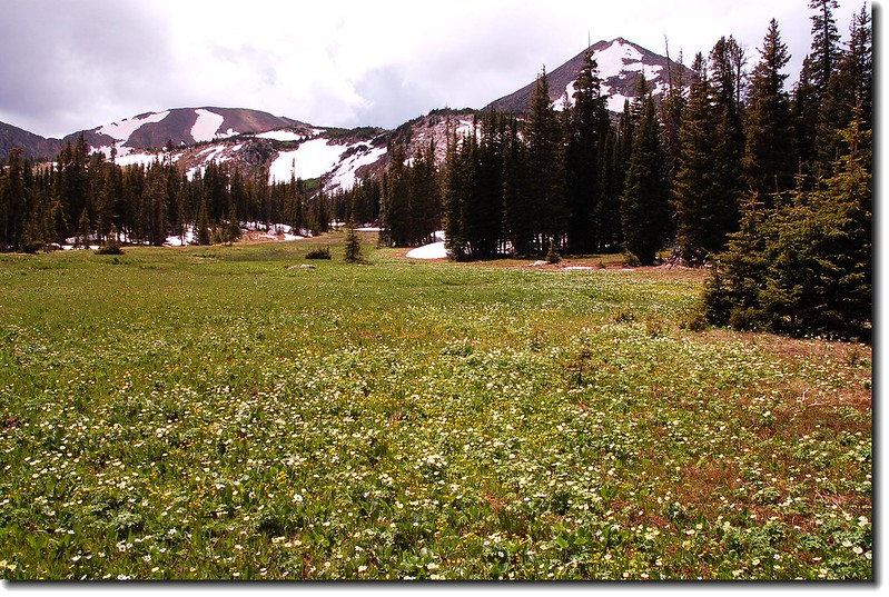 A large meadow Before Diamond Lake 5
