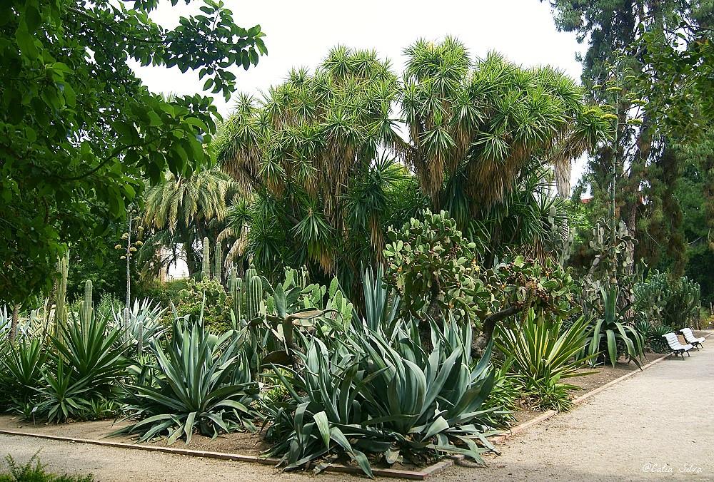 Jardin Botánico de Valencia (14)