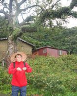 錫塒大哥在南港舊莊百年老樟樹前與大家解說老樟樹的歷史