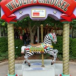 Wildlife Carousel