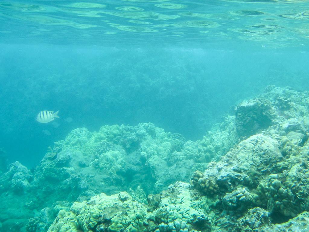 Keawapaku Beach - Maui
