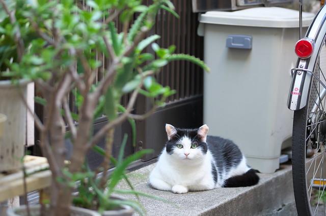東京路地裏散歩 王子のネコ2014年6月15日