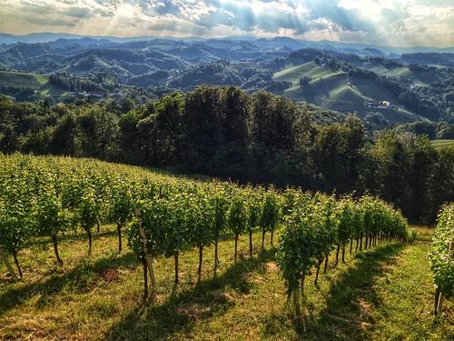 travel austria österreich vineyard 2014 sernau nikond5300 paddybb