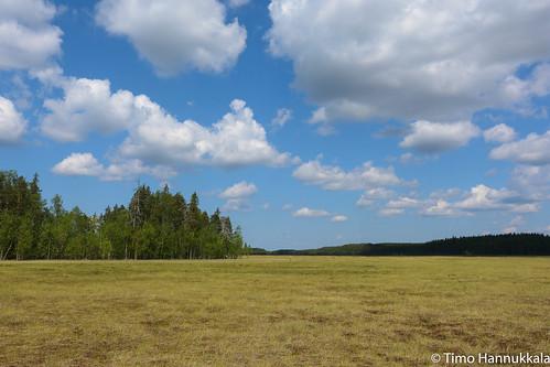 nature finland nikon swamp fi ruovesi siikaneva pirkanmaa d7100 soidensuojelualue