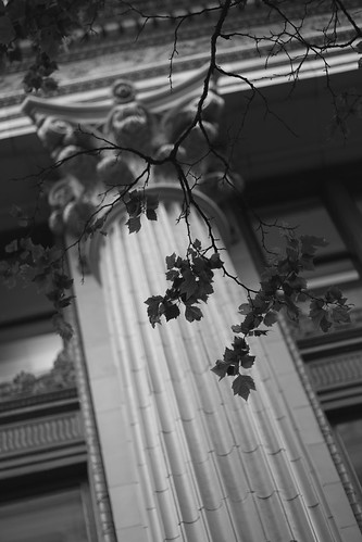columns and leaves
