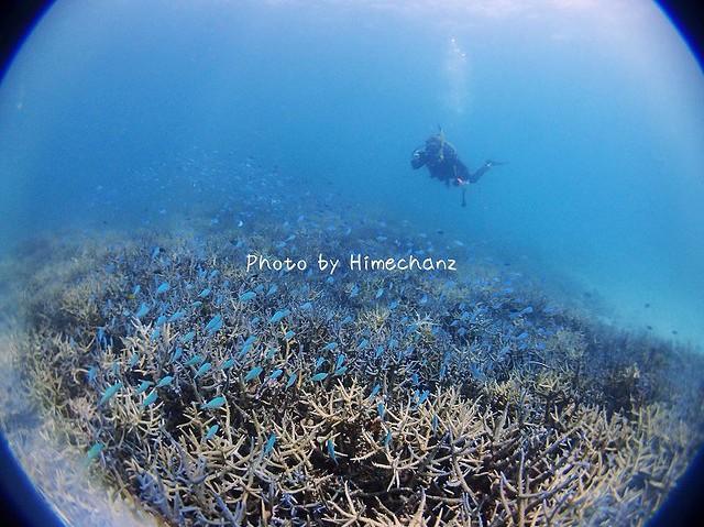 サンゴもデバスズメダイもいっぱい