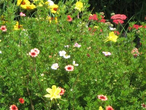 Randi & Colorado greenery