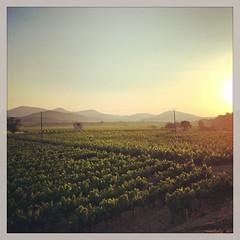 Profiter de la fraîcheur du matin et du levé de soleil sur le vignoble de Saint Chinian  #sunrise #pradessurvernazobre #saintchinian #herault #languedoc #igersmontpellier #iphone5s