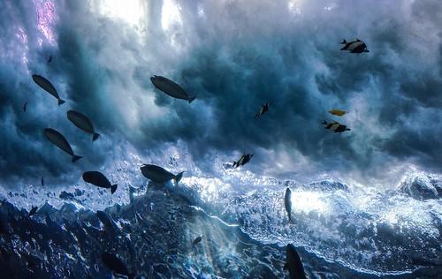 fish surf getlow dedpxl04 tropicaldiverpresentedbysouthwestairlines