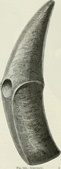 """Image from page 187 of """"The ancient stone implements, weapons, and ornaments, of Great Britain"""" (1872)"""