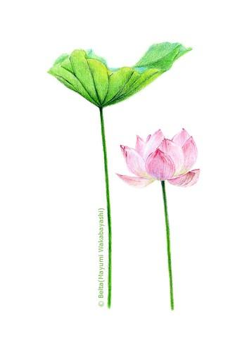 2014_07_11_lotus_01_s