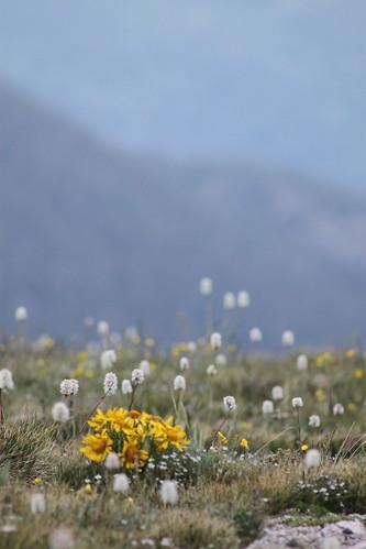 Wildflowers :)